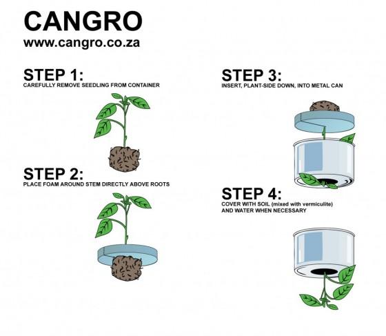 cangrow4